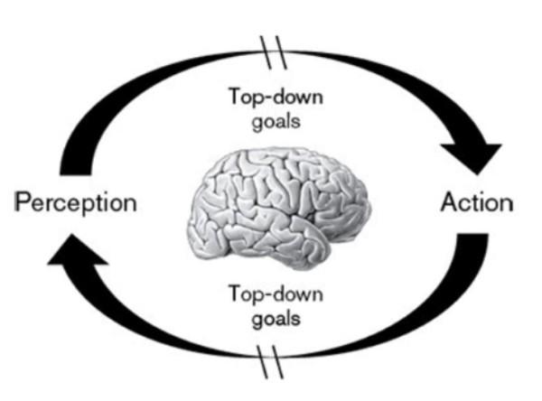 perception action